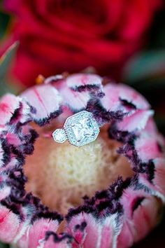 Engagement ring nestled inside a king protea   Photo by Solie Designs