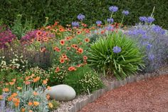 My Favorite Plant Combinations 10