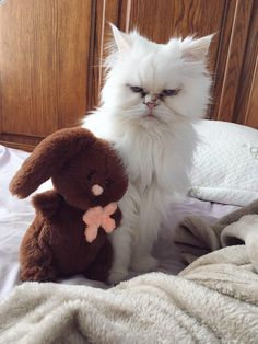 My cat looking unimpressed with his new inanimate roommate #aww #cute #cutecats #catsofpinterest #cuddle #fluffy #animals #pets #bestfriend #boopthesnoot