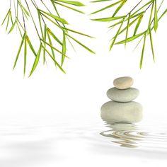 bambou zen - Recherche Google