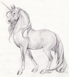 34 Best Unicorn Sketch Images Art Drawings Drawing S Drawings Of