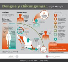 ¡Tira botellas y chatarra! El mosquito transmisor del #Dengue y #Chikungunya vive en lugares con agua estancada