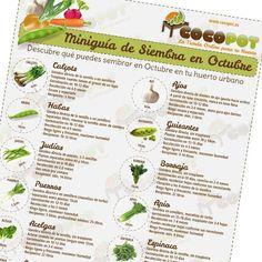 Miniguía de Siembra en Octubre¿Ya sabes lo que puedes sembrar en agosto