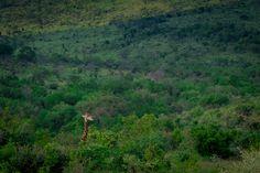 Wildlife photography by Melanie Wildlife Photography, South Africa, Nature, Naturaleza, Nature Illustration, Off Grid, Nature Photography, Natural