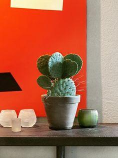 Laat je inspireren door Exposé #01 met Menno Kroon #Mooiwatplantendoen #Exposé