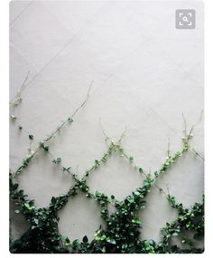 Vines are plants that exhibit a climbing ot trailing habit. Vines look nice for the garden and are easy to maintain. Learn about the various types of vines. Dream Garden, Garden Projects, Indoor Plants, Indoor Balcony, Indoor Climbing Plants, Backyard Plants, Backyard Ideas, Backyard Patio, Patio Ideas