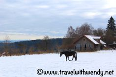 My horse use to grow such a thick coat of fur during the winter months. I remember thinking she must've been cold but she loved the snow too ~ after a run, I'd watch her roll around in it to cool off!   Germany has many opportunities to hike and walk - sometimes these winter scenes will just bring you back to a memory.