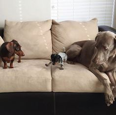 Harlow and Indiana and Reese meeting