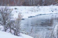 ktreephotography, {katriel abbott}, tree photography, winter engagement