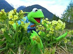 Kermit, Frog, Green, Cowslip, Primrose