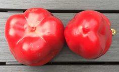 Handig om te weten als je een paprika koop. Koop je een mannelijke of vrouwelijke paprika? Want dat maakt wel degelijk uit voor de smaak!