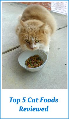 Which is the best cat food for your cat? My picks for the top 5 cat foods are chosen for their approximation to a cat's natural diet in the wild - high quality proteins without by-products or fillers  ... see more at PetsLady.com ... The FUN site for Animal Lovers