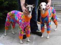 Pyjamas for your dog. So wrong yet so right.
