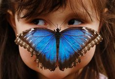 Three year old, Stella Ferruzola poses with a Blue Morpho butterfly on her nose at the Sensational Butterflies Exhibition at the Natural History Museum in London. Luke MacGregor/REUTERS