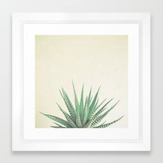 Haworthia Framed Art Print