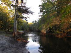 2. Withlacoochee State Forest