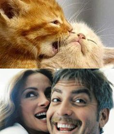 You can't survive this crazy #cat world without your #bestfriend by your side. #JuliaRoberts and #GeorgeClooney already know this though. #pawnation #pawparazzi #celebrity #animals #cats