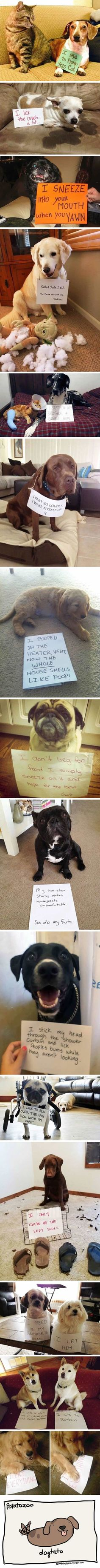 Dogs being shamed for their terrible crimes - 9GAG
