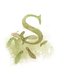 Letter S, Samara, Nature Theme Alphabet Art Nursery 8.5 x 11. $20.00, via Etsy.