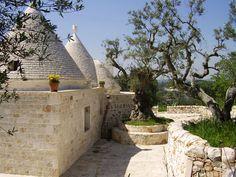 Die alten Olivenbäume passen wunderbar ins Bild
