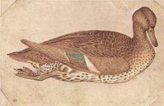 Duck (1440) - Early Renaissance