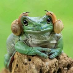 Princess Leia Zard