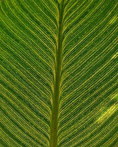 leaf or feather?
