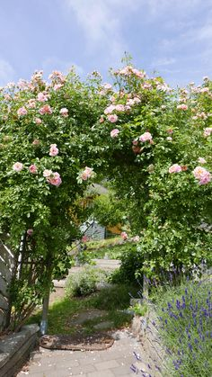 Seks kule klatreplanter du vil lykkes med - Tusenfryden Climbers, Garden, Plants, Garten, Flora, Plant, Lawn And Garden, Outdoor, Tuin