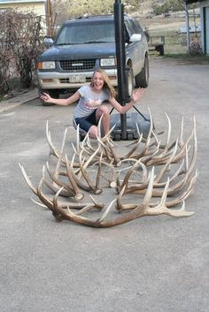 One day's collection of fine elk sheds