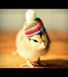 Un petit bonnet à pompon a été choisi pour celui-ci/ ©Julie Persons