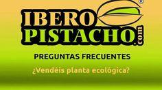 ¿Vendéis planta ecológica? - Preguntas Frecuentes - IberoPistacho