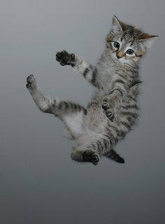 Flying kitten