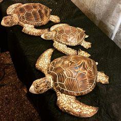 Sea turtles by Joshua Blewett