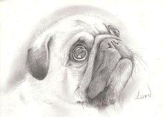 pencil drawings of pugs | beautiful pencil drawing isn't it? | Pug Mugs