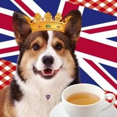 Think of afternoon tea. what comes to mind? English ladies sat around a table sharing a pot of tea, drinking from bone china cups with pinki fingers raised. Corgi Facts, Cuppa Tea, Corgi Dog, Pembroke Welsh Corgi, 90th Birthday, Great British, Union Jack, Afternoon Tea, Tea Time