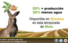Obtén 20% más producción, con 20% menos agua.