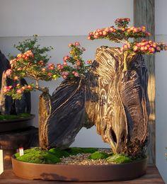 "Mrinalini Mazumder   ""AN AWARDED PIECE OF NATURAL ART""--Bonsai Chrysanthemum. Picture captured at  Bonsai exhibition Himeji, Japan"