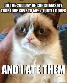 on the 2nd day of christmas my true love gave to me 2 turtl - Grumpy Cat
