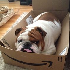 Free shipping from Amazon!