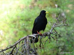 sounds of birds Sounds Of Birds, Meditation, Animals, Consciousness, Healing, Nature, Animaux, Animal, Animales