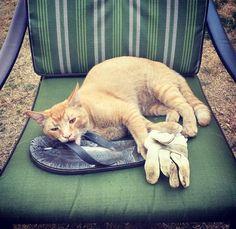Cat-burglar kitty has its own Instagram featuring her stolen stash
