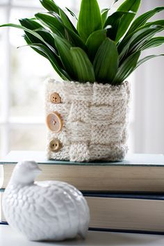 knitted plant cozy