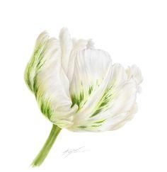 Flowers - Mali Moir