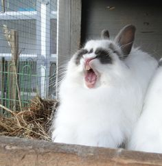 I hate seeing bunnies (or any animal) in cages.