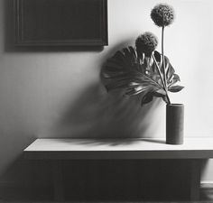 ROBERT MAPPLETHORPE http://www.widewalls.ch/artist/robert-mapplethorpe/ #RobertMapplethorpe #photography #B&W