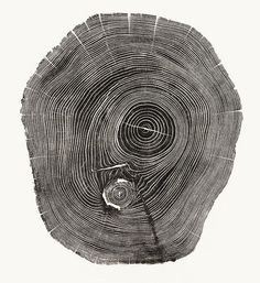 Beautiful Photos Of Tree Rings Remind Us To Slow Down A Little | Co.Exist | ideas + impact