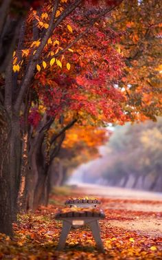 nature - Mesmerizing Nature - One word for this . Tagpik One word for this stunning place please. 😍 Mention someone that needs to see Autumn Scenery, Autumn Trees, Fall Pictures, Fall Photos, Autumn In Korea, Beautiful Places, Beautiful Pictures, Beautiful Sky, October Country