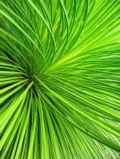 Vert / Green  #heritagecollection