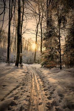 "radivs: "" The Ski Trail by Martin Tomsu """