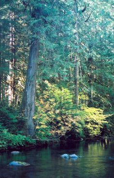 Paul Gerard posted hikes in Portland, Oregon area. This photo is along the Salmon River. Hikes Near Portland, Portland Oregon, Bridgetown, State Of Oregon, Places In Europe, Travel With Kids, Washington State, Pacific Northwest, Wonderful Places